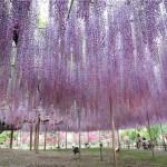 Парк цветов Кавати Фужи
