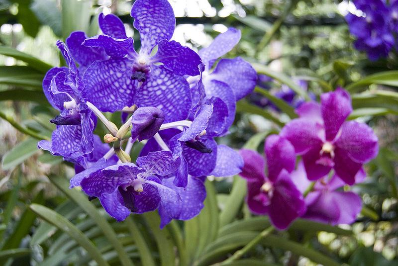 Орхидеи в Ботаническом саду
