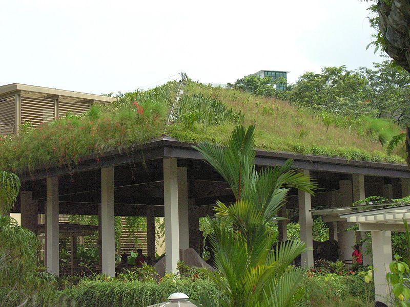 Зеленая крыша в Зеленом павильоне в Ботаническом саду Сингапура