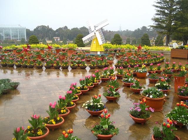 """Цветочный парк """"Хамамацу"""" сезонные цветы"""