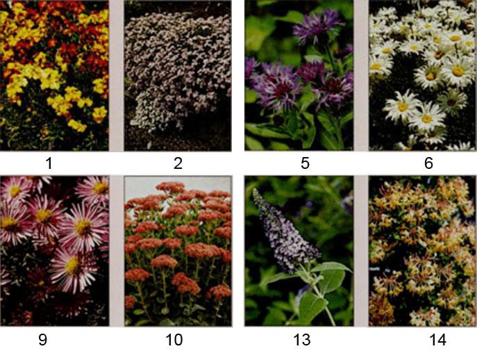 Растения, клумба для бабочек