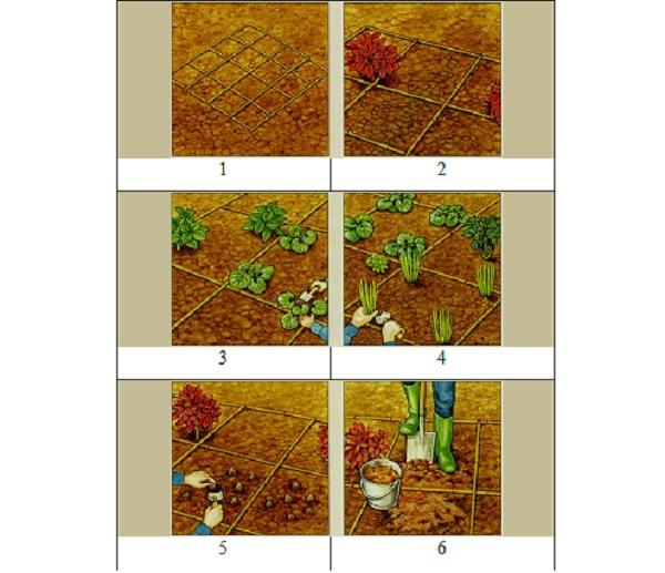 Посадка  клумбы с теневыносливыми растениями