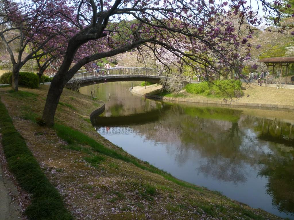 """Цветочный парк """"Хамамацу"""" пруды"""