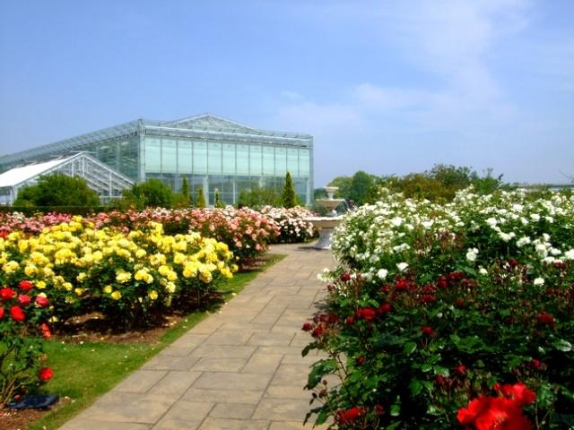 """Цветочный парк """"Хамамацу"""" , розарий"""
